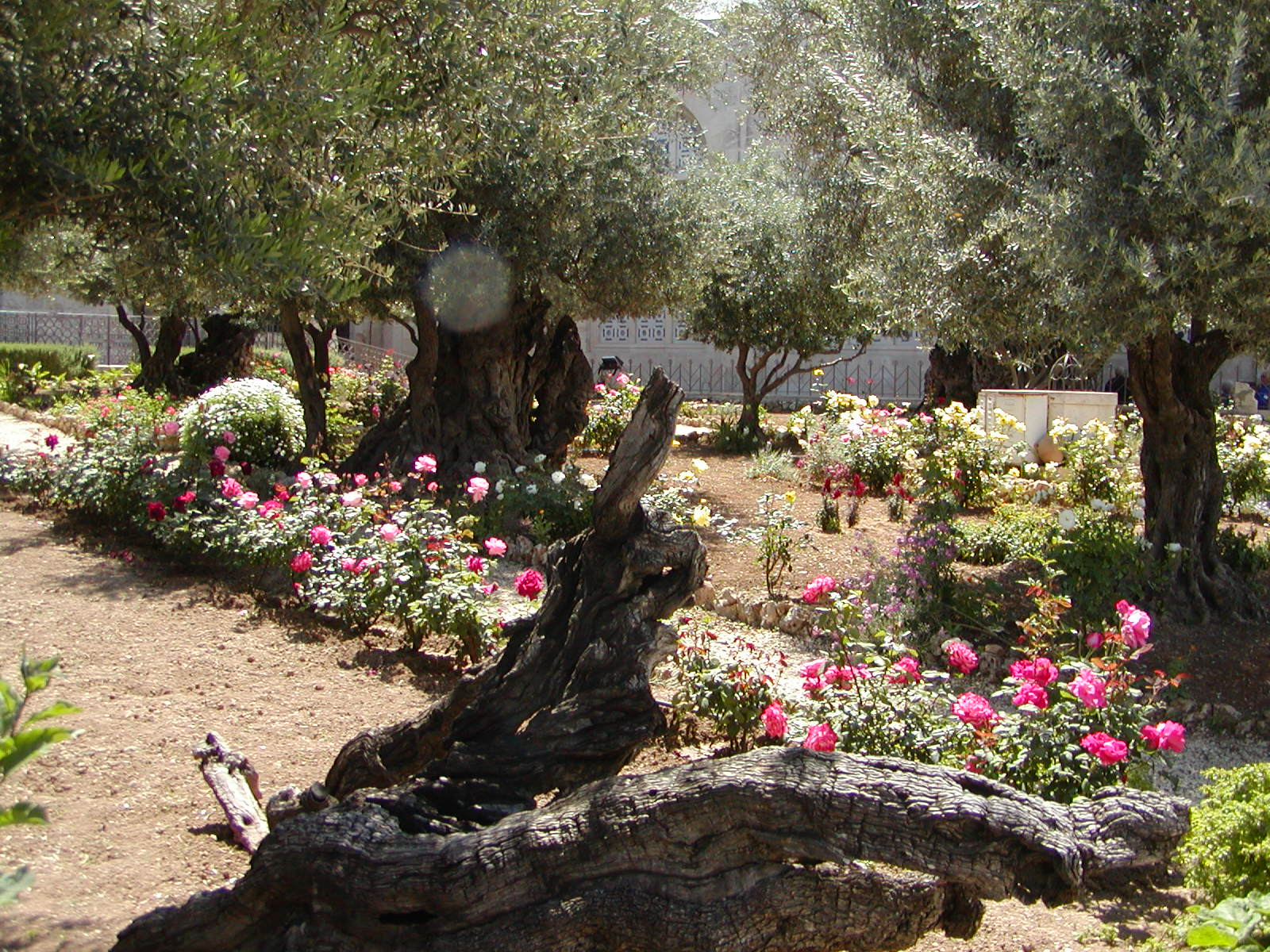 Where Is The Garden Of Gethsemane Israel Tours Maranatha Tours