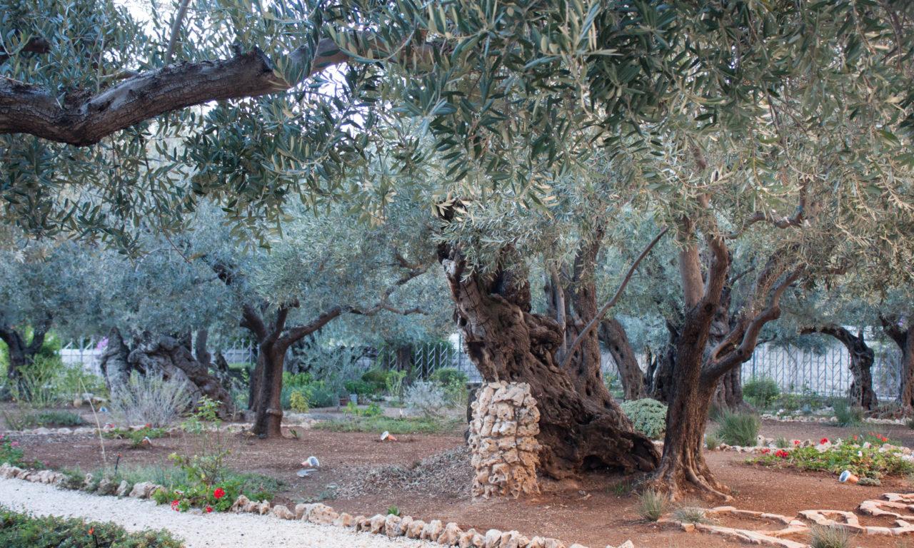 Maranatha Tours Israel